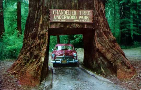 Chandelier Tree - Underwood Park