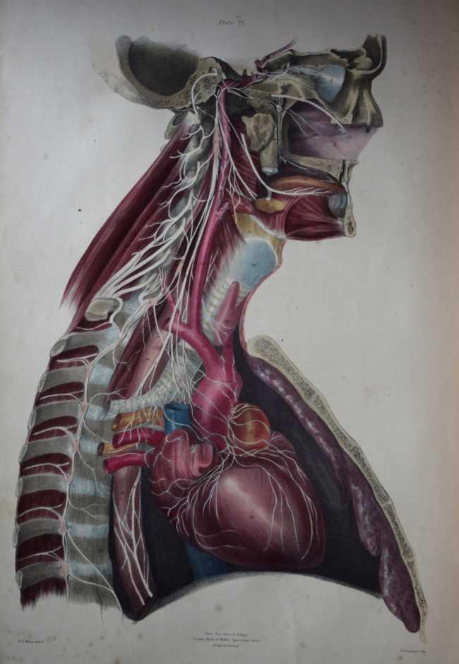 Medical Print